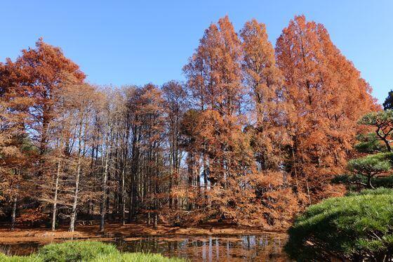 神代植物公園 紅葉 見頃
