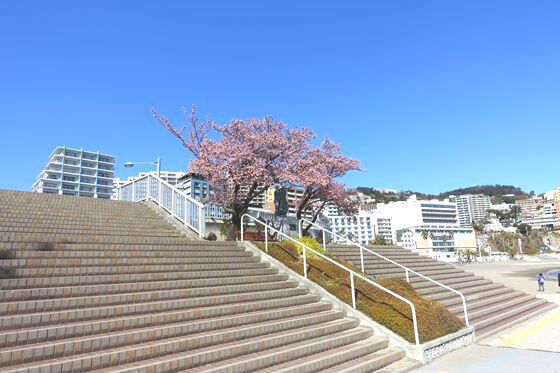 サンビーチ あたみ桜