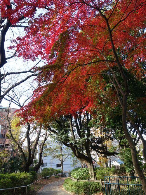 桜木町 掃部山公園 紅葉