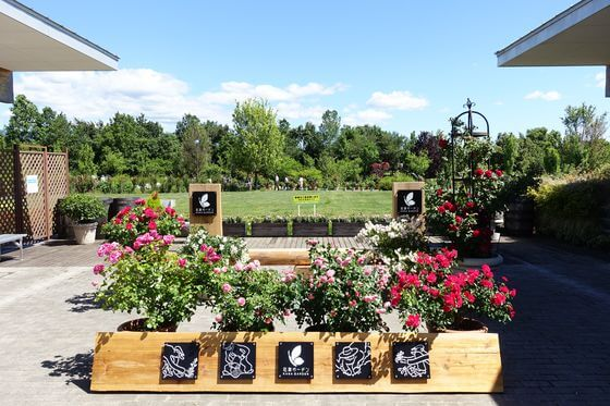 花菜ガーデン アクセス