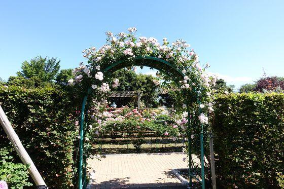 花と緑のふれあいセンター バラ