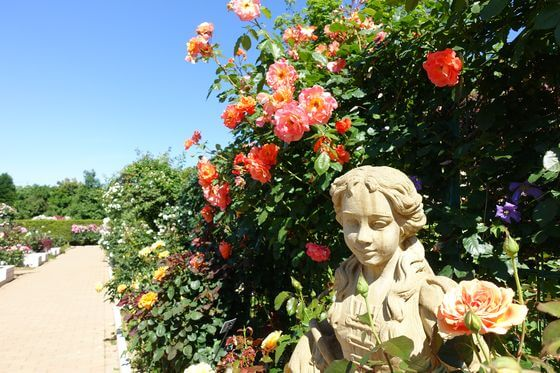 平塚 薔薇
