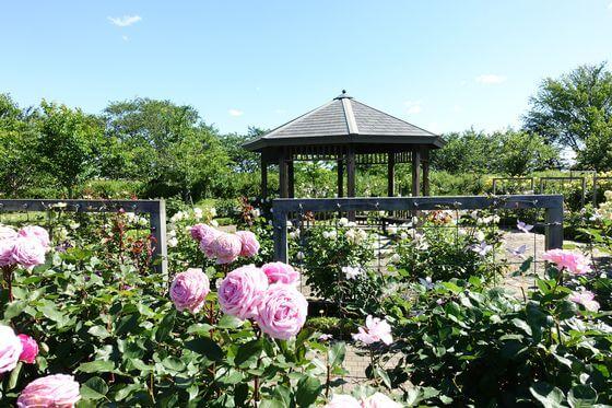 花菜ガーデン バラ園