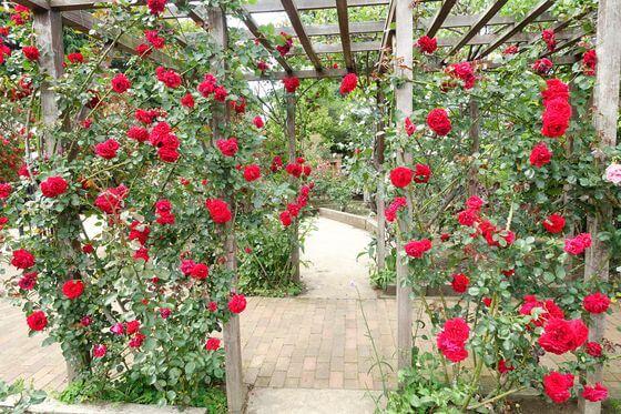京王フローラルガーデン 薔薇