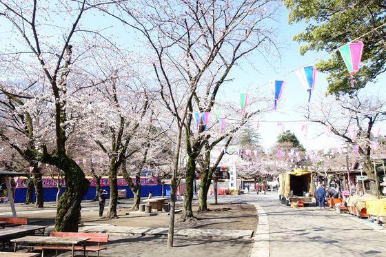 川越大師 桜