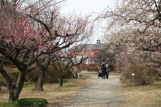 東京大学総合研究博物館 小石川分館
