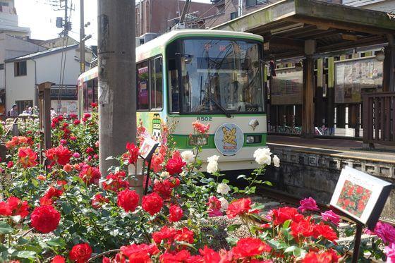 三ノ輪橋駅 薔薇