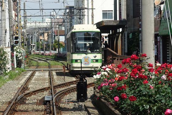 三ノ輪橋駅 バラ