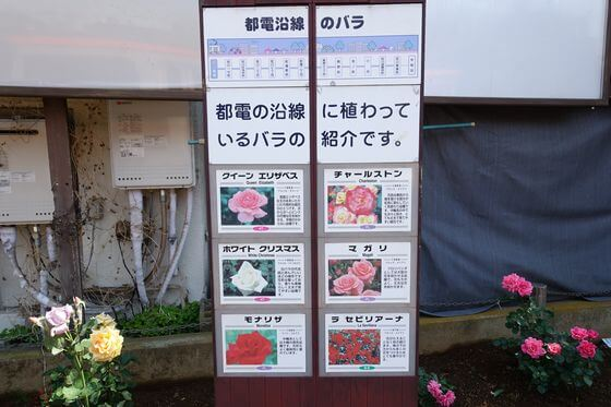 三ノ輪 薔薇