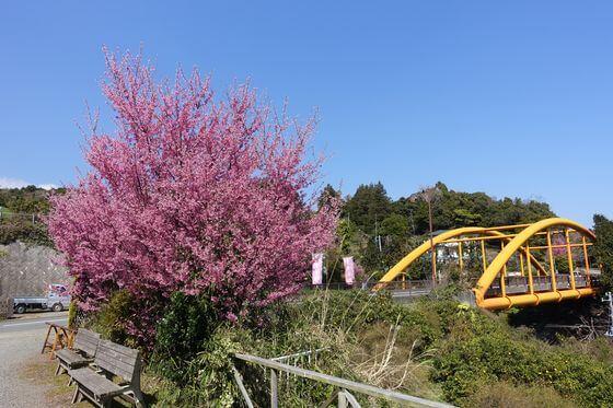 オーランジェガルデン 桜