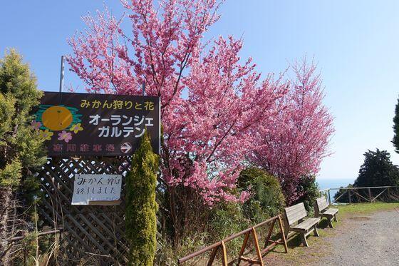 オーランジェ ガルデン おかめ桜