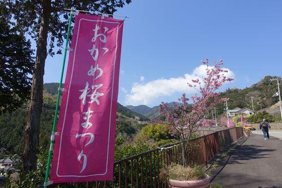 根府川 おかめ桜まつり