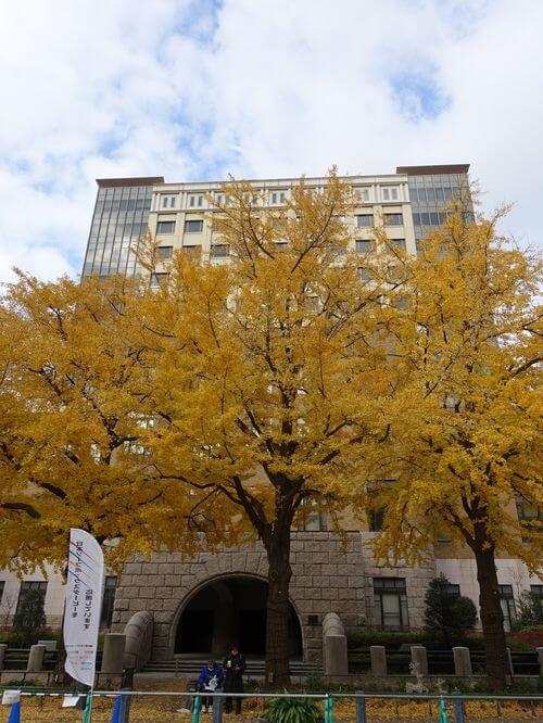 横浜地方裁判所 銀杏