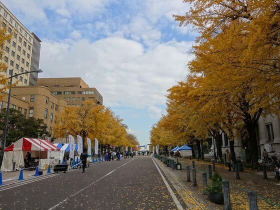 日本大通り 銀杏並木
