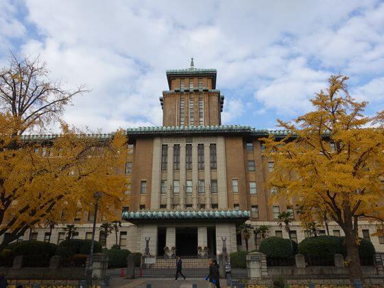 横浜県庁 イチョウ