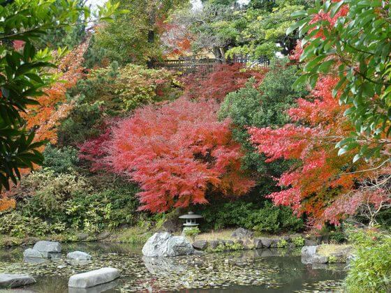 野毛山公園 紅葉