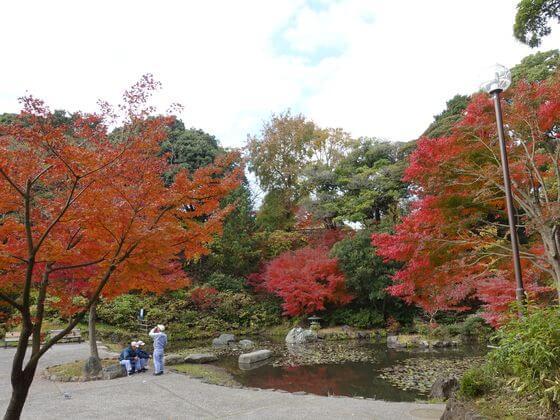 横浜 野毛山公園 紅葉