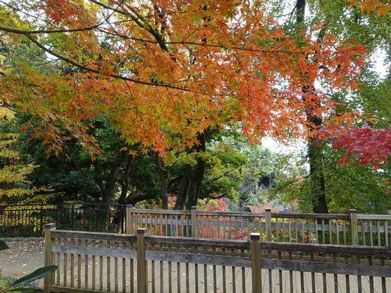 野毛山公園 紅葉 見頃