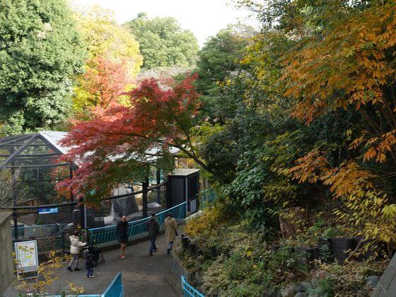 横浜 野毛山動物園 紅葉