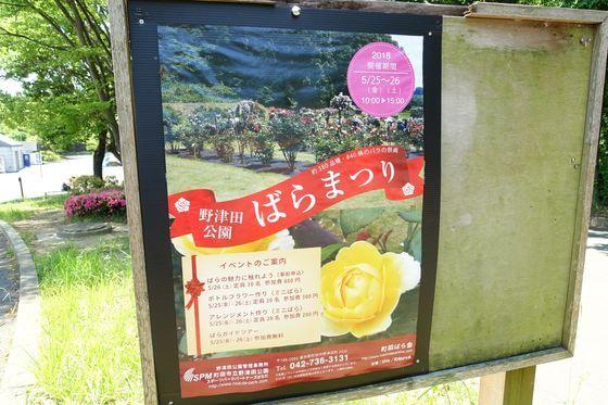 野津田公園 バラ祭り
