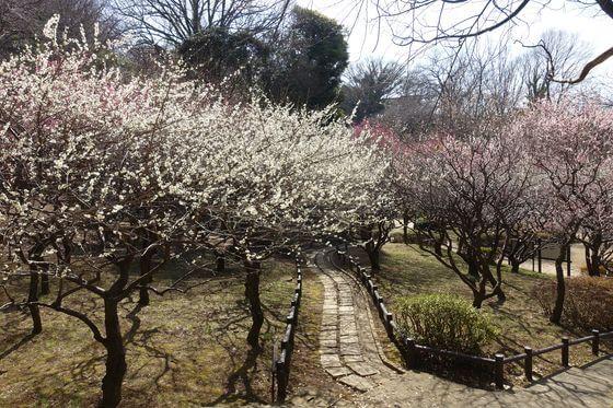 岡村公園 梅園