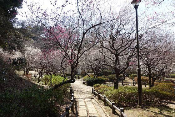梅 岡村公園