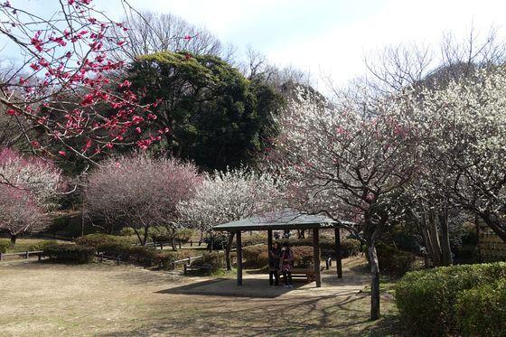 梅林 岡村公園