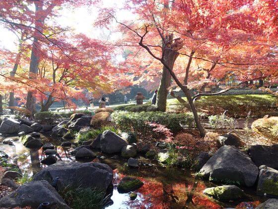 杉並区 大田黒公園 紅葉