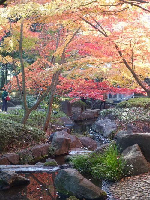 大田黒公園 紅葉狩り