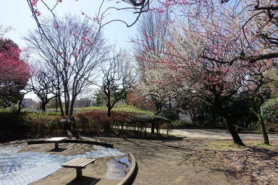 梅 西郷山公園