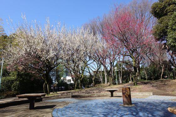 西郷山公園 梅