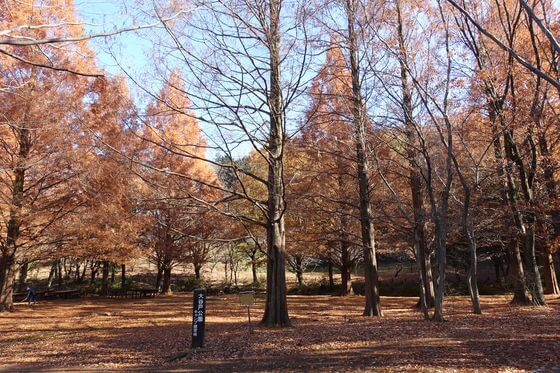 大谷戸公園 紅葉