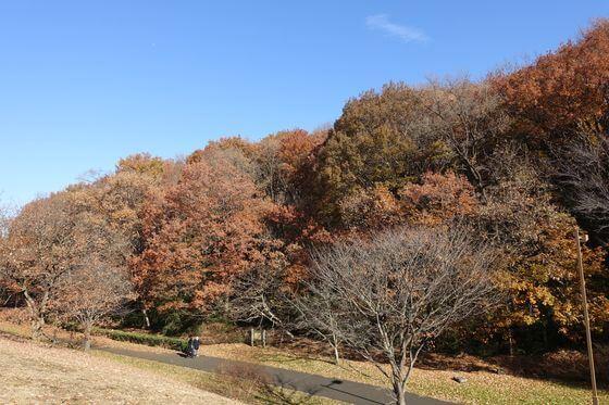 桜ヶ丘公園 紅葉