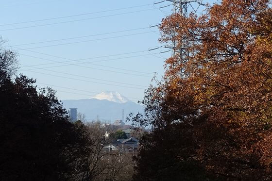 紅葉 桜ヶ丘公園