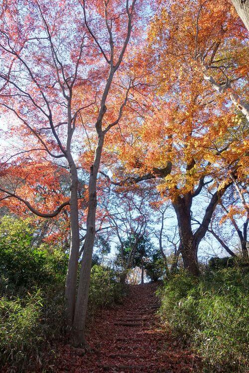 東京 桜ヶ丘公園 紅葉