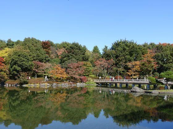 昭和記念公園 カエデ