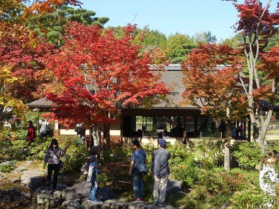 国営昭和記念公園 紅葉