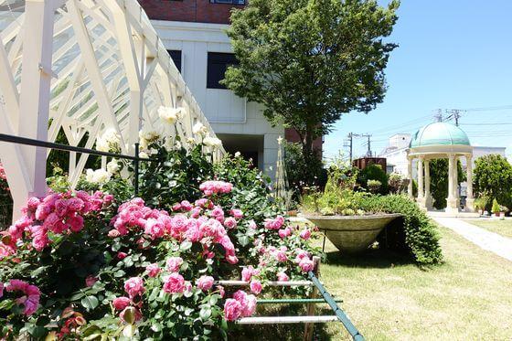 ホテルサンライフガーデン 薔薇