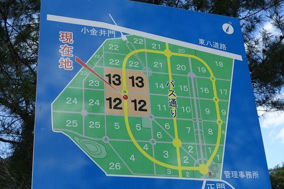 多磨霊園 桜 場所
