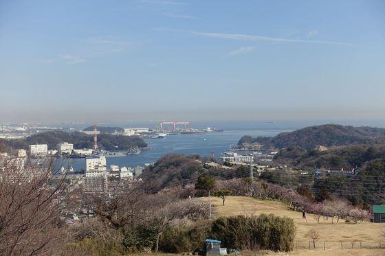 横須賀 梅