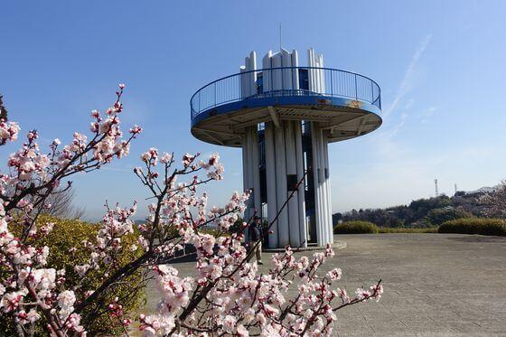 田浦梅の里 展望塔