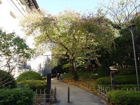 東京国立博物館 庭園 紅葉