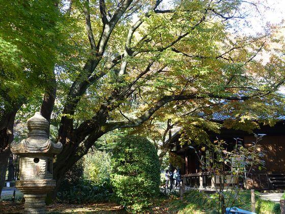 上野 東京国立博物館 庭園 紅葉