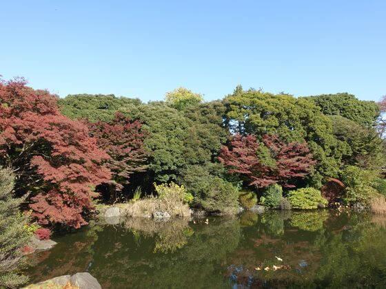 東京国立博物館 紅葉 見頃