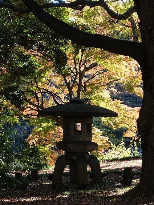 東京国立博物館 楓