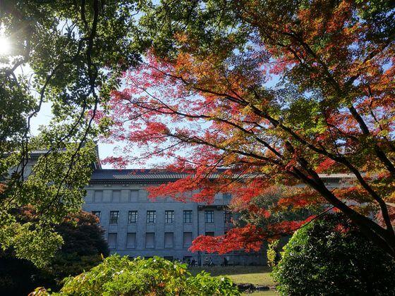 東京国立博物館 紅葉