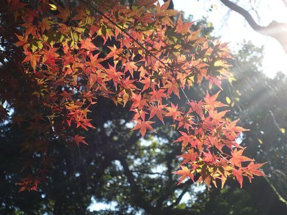 東京国立博物館 紅葉 状況