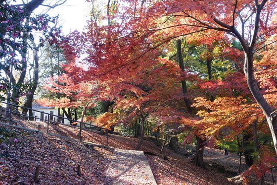 戸山公園 紅葉