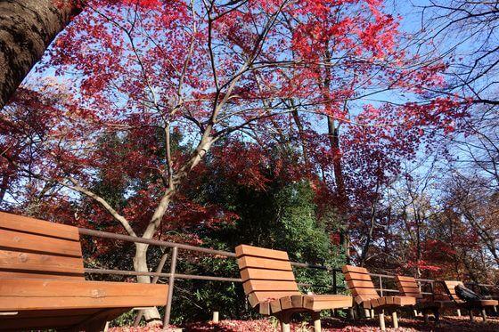 戸山公園 箱根 紅葉
