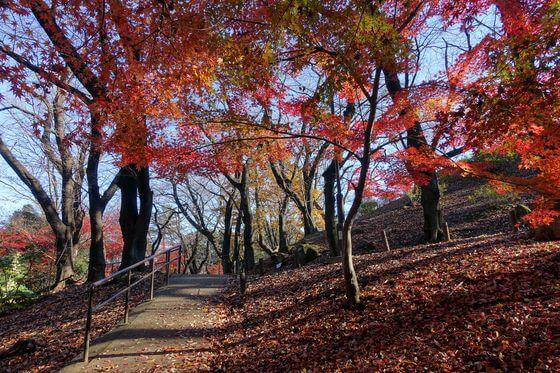戸山公園 箱根地区 紅葉